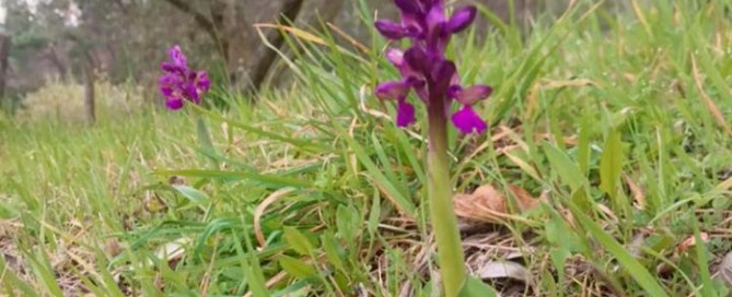 Podere gli Scassi field flowers